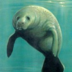 year for manatees free...